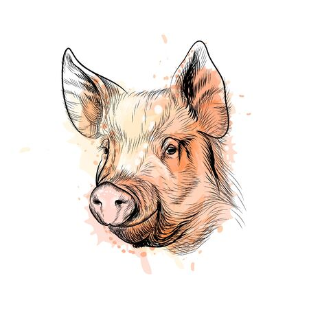 Portrait of a pig head. Chinese Zodiac Sign Year of Pig