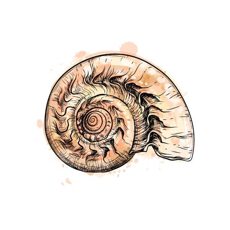 Nautilus shell section isolated on black background
