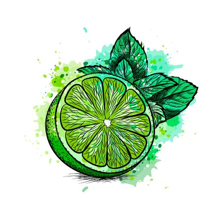 Fresh lime with leaves and mint from a splash of watercolor, hand drawn sketch Foto de archivo - 130826089