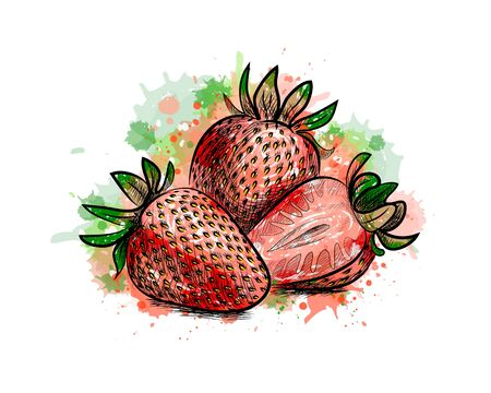 Strawberry. Sweet fruit from a splash of watercolor, hand drawn sketch. Vector illustration of paints Foto de archivo - 130826090