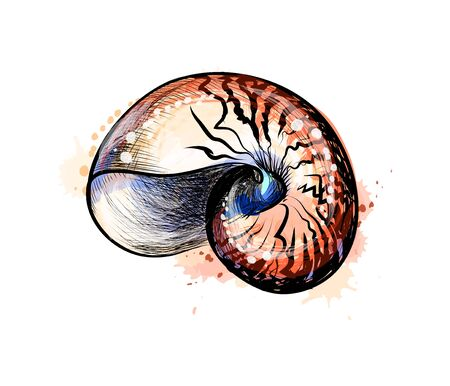 Sea shell from a splash of watercolor, hand drawn sketch. Vector illustration of paints Vectores