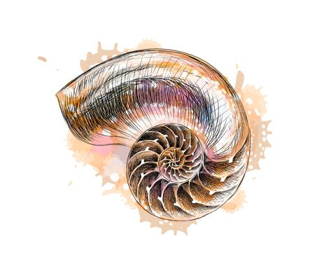 Nautilus shell section from a splash of watercolor, hand drawn sketch. Vector illustration of paints Foto de archivo - 130826095