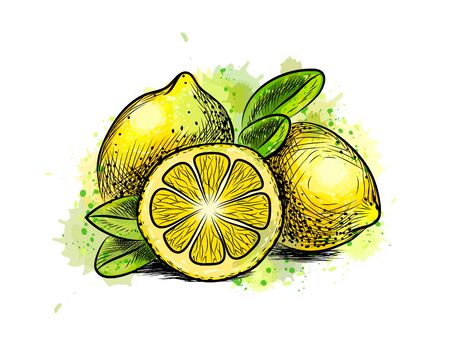 Lemon with leaves from a splash of watercolor, hand drawn sketch. Vector illustration of paints Foto de archivo - 130826284