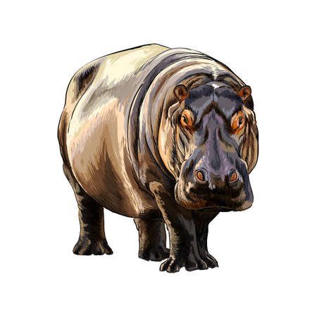 Hippopotamus from a splash of watercolor, colored drawing, realistic