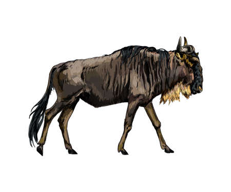 Wildebeest from a splash of watercolor, colored drawing, realistic Ilustração