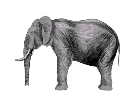 Elephant from a splash of watercolor, colored drawing, realistic