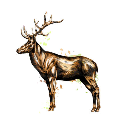 Red deer from a splash of watercolor, colored drawing, realistic