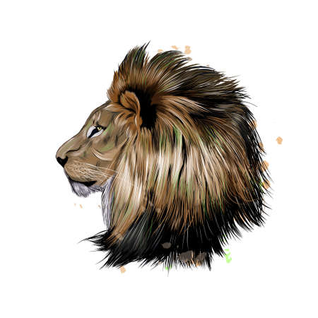 Lion head portrait from a splash of watercolor, colored drawing, realistic