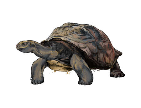 Galapagos turtle from a splash of watercolor, colored drawing, realistic Ilustração
