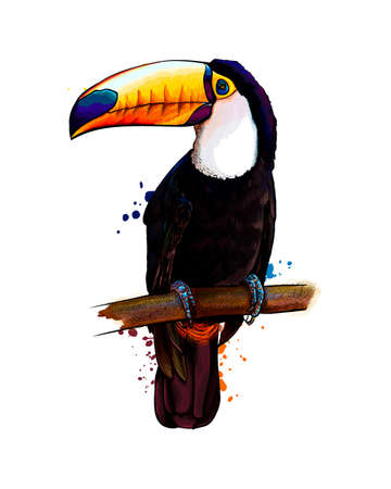Toucan, tropical bird from a splash of watercolor, colored drawing, realistic Ilustração