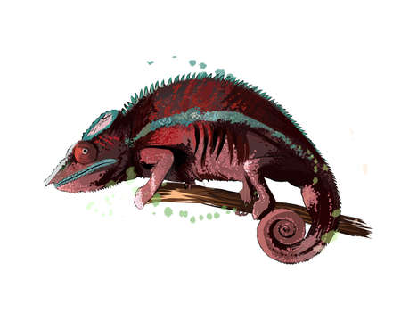 Chameleon from a splash of watercolor, colored drawing, realistic