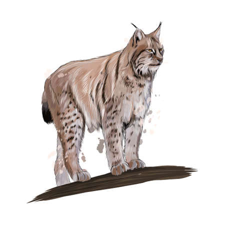 Lynx from a splash of watercolor, colored drawing, realistic