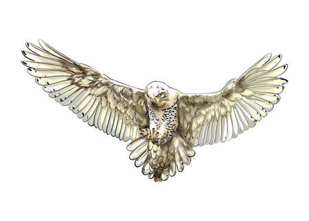 Long-eared Owl, Eagle owl, Polar owl in flight from a splash of watercolor, colored drawing, realistic
