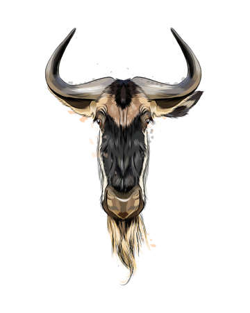 Wildebeest head portrait from a splash of watercolor, colored drawing, realistic