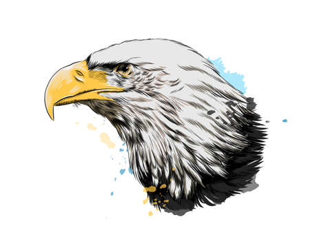 Bald eagle head portrait from a splash of watercolor, colored drawing, realistic
