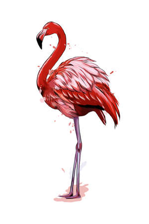Pink flamingo from a splash of watercolor, colored drawing, realistic Ilustração