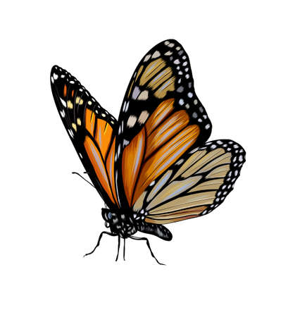 Butterfly from a splash of watercolor, colored drawing, realistic Ilustração