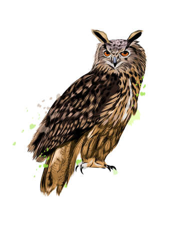 Long-eared Owl, Eagle owl from a splash of watercolor, colored drawing, realistic