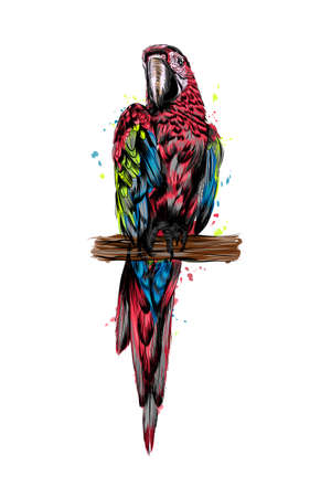 Parrot macaw from a splash of watercolor, colored drawing, realistic Ilustração