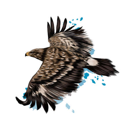 Flying steppe eagle from a splash of watercolor, colored drawing, realistic
