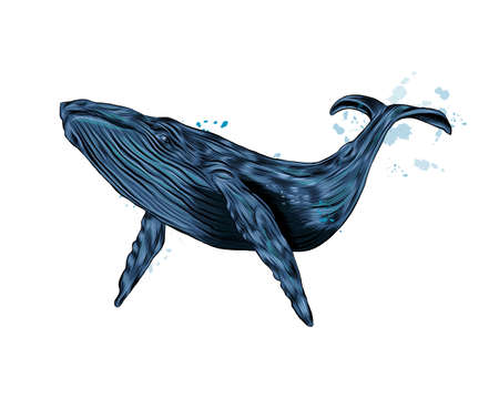 Humpback whale, blue whale from a splash of watercolor, colored drawing, realistic Ilustração