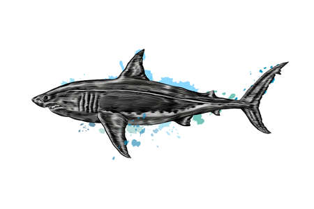Great white shark from a splash of watercolor, colored drawing, realistic Ilustração