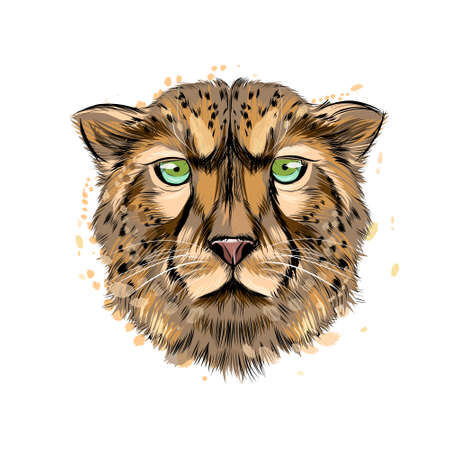 Cheetah head portrait from a splash of watercolor, colored drawing, realistic