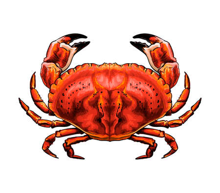 Red crab from a splash of watercolor, colored drawing, realistic