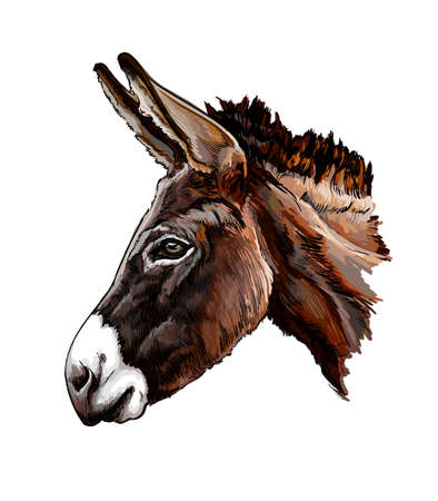 Donkey head portrait from a splash of watercolor, colored drawing, realistic