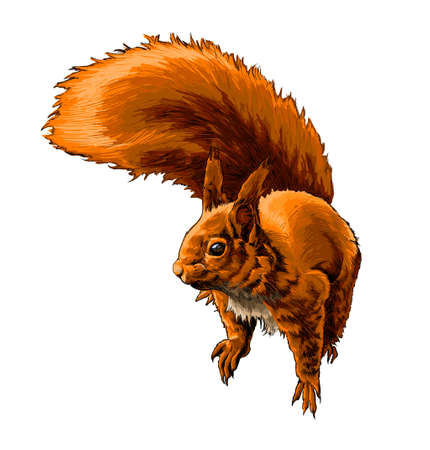 Eurasian red squirrel from a splash of watercolor, colored drawing, realistic Ilustração