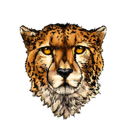 Cheetah head portrait from a splash of watercolor, colored drawing, realistic Ilustração