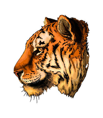 Tiger head portrait from a splash of watercolor, colored drawing, realistic