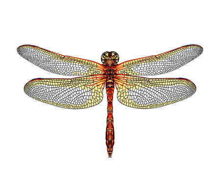 Dragonfly from a splash of watercolor, colored drawing, realistic Ilustração