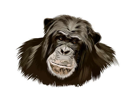 Monkey chimpanzee head portrait from a splash of watercolor, colored drawing, realistic