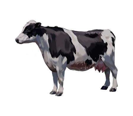 Black and white cow from a splash of watercolor, colored drawing, realistic Ilustração