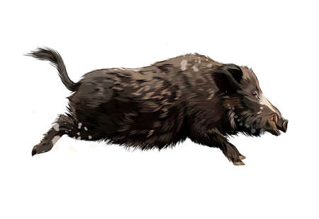 Boar from a splash of watercolor, colored drawing, realistic