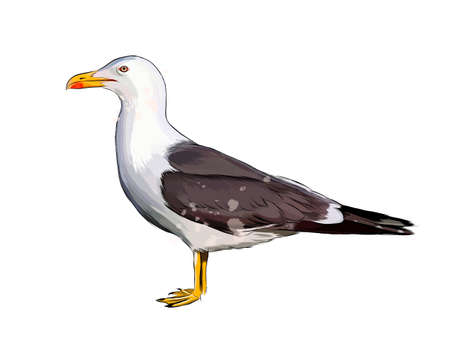 Seagull from a splash of watercolor, colored drawing, realistic Ilustração