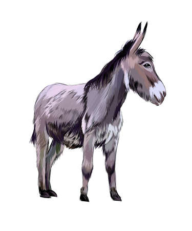 Donkey from a splash of watercolor, colored drawing, realistic Ilustração