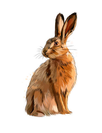 Hare, rabbit from a splash of watercolor, colored drawing, realistic Ilustração