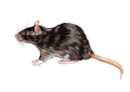 Rat, mouse from a splash of watercolor, colored drawing, realistic Ilustração