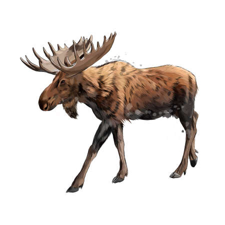 Moose from a splash of watercolor, colored drawing, realistic Ilustração