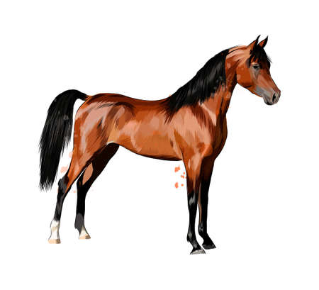 Horse from splash of watercolors. Hand drawn sketch