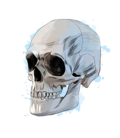Human skull from a splash of watercolor, colored drawing, realistic