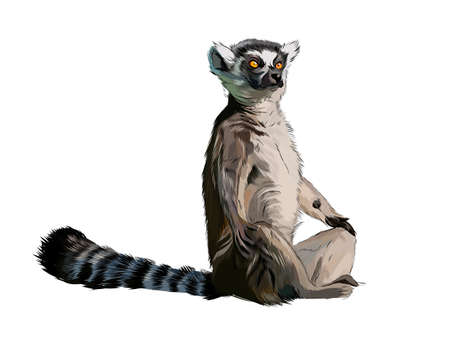 Lemur from a splash of watercolor, colored drawing, realistic Ilustração