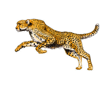 Cheetah from a splash of watercolor, colored drawing, realistic Ilustração