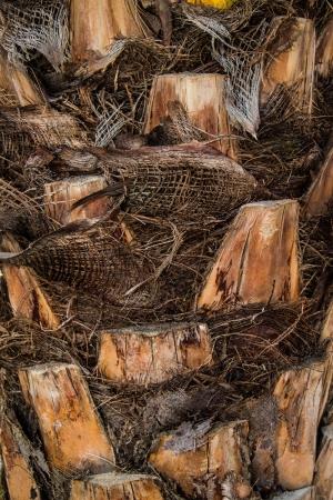 Skin tree photo