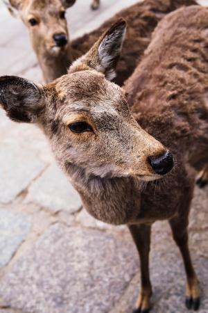 meadowland: Deer