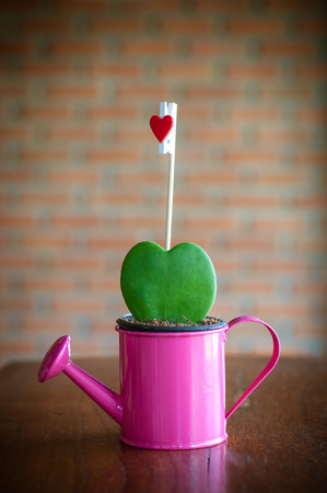 Cactus Heart photo