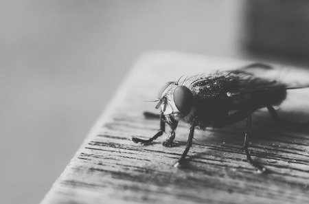 irritate: fly Stock Photo