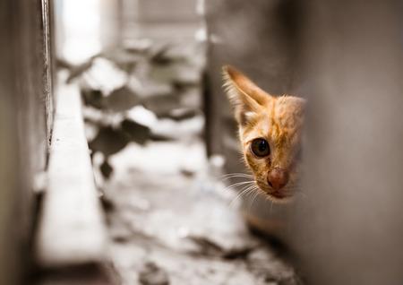 길 잃은 새끼 고양이 스톡 콘텐츠